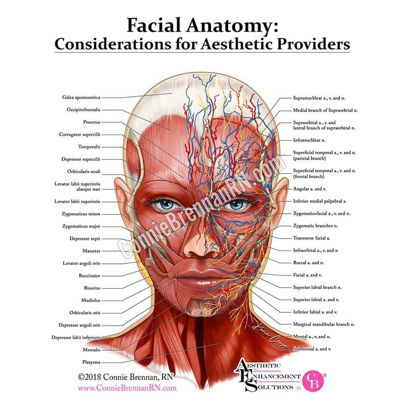 Facial Anatomy: Considerations for Aesthetic Providers Posters and ...